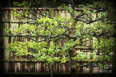 Photograph - Serene Japanese Tree With Bamboo Fence by Carol Groenen