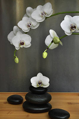 Photograph - Serene Orchid by Terence Davis