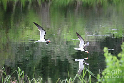 Reflection On Pond Photograph - Serene Skimmers by Carol Groenen