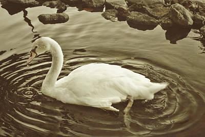 Photograph - Serene Swimmer by Jamart Photography