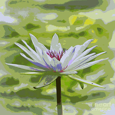 Photograph - Serene Water Lily by Carol Groenen