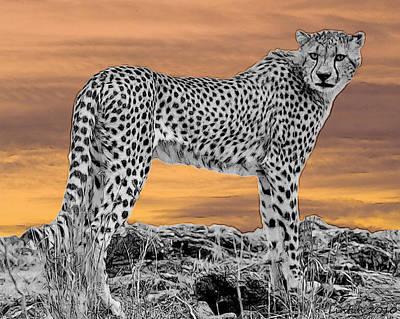 Cheetah Digital Art - Serengeti Cheetah by Larry Linton
