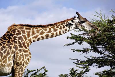 Photograph - Serengeti Giraffe by Dennis Cox WorldViews