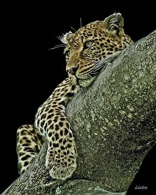 Digital Art - Serengeti Leopard 2a by Larry Linton
