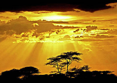 Photograph - Serengeti Sun Rays by Dennis Cox WorldViews