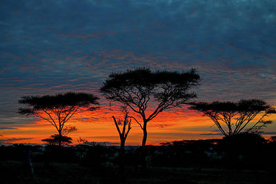 Photograph - Serengeti Sunrise by Marilyn Burton