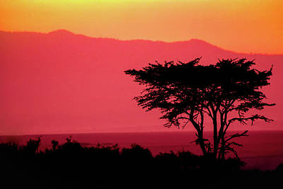 Photograph - Serengeti Sunset by Sebastian Musial