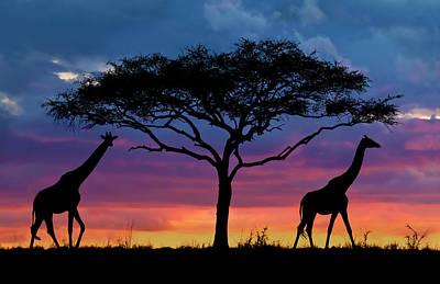 Serengeti Sunset Art Print by Stu  Porter