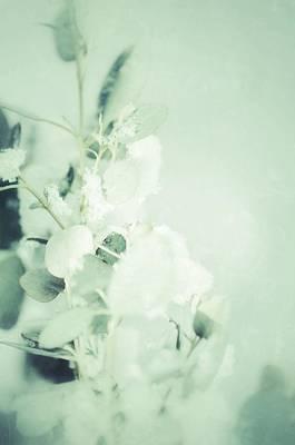Photograph - Serenity 6 by Sarah Coppola