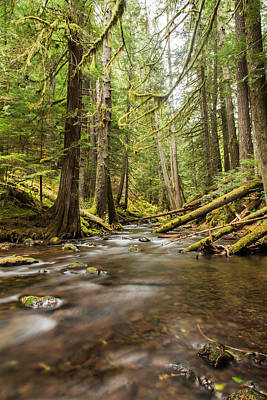 Fir Trees Photograph - Serenity At Panther Creek by Angie Vogel