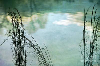 Serenity Art Print by Doug Sturgess