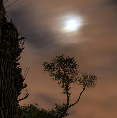 Photograph - Serenity... by Dubi Roman