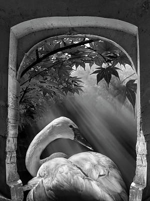 Photograph - Serenity In Black And White by Debra and Dave Vanderlaan