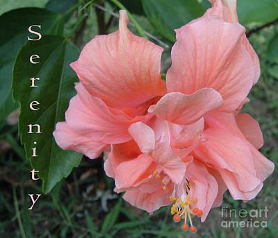 Belinda Landtroop Royalty Free Images - Serenity in Nature Royalty-Free Image by Belinda Landtroop