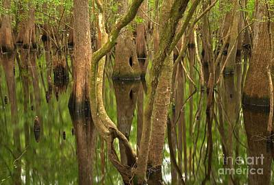 Photograph - Serenity In The Cypress by Adam Jewell