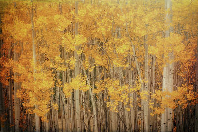 Photograph - Serenity In The Fall Forest  by Saija Lehtonen