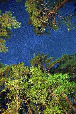 Photograph - Serenity In The Night Sky by Steve Evans
