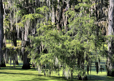 Cypress Swamp Photograph - Serenity In Yazoo City by JC Findley