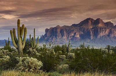 Serenity Of The Sonoran  Art Print