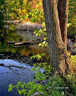 Photograph - Serenity by Susie Loechler
