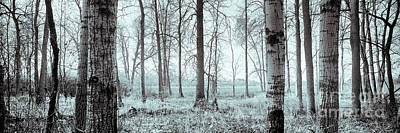 Photograph - Series Silent Woods 2 by RicharD Murphy