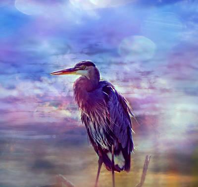 Photograph - Serious Bird by Lilia D