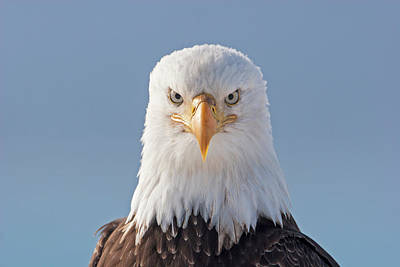 Photograph - Serious Eagle  by Mark Miller