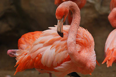 Serious Flamingo Art Print by Teresa Blanton