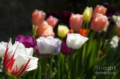 Photograph - Seriously Colourful by Wendy Wilton