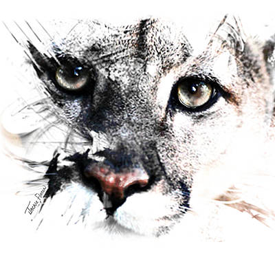Seriously Cougar Art Print