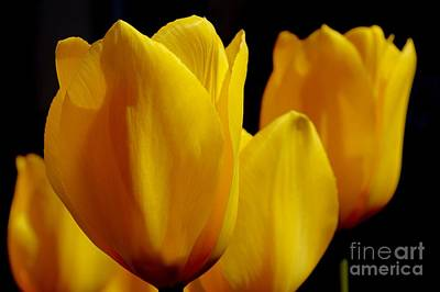 Photograph - Seriously Yellow by Wendy Wilton