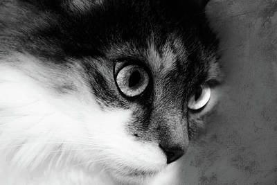 Photograph - Seriously You Have Issues Black And White Cat Art by Georgiana Romanovna