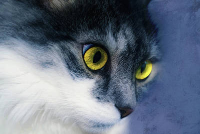 Photograph - Seriously You Have Issues Cat Art by Georgiana Romanovna