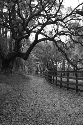 Photograph - Serpentine Stroll by Suzanne Gaff