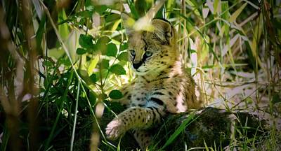 Animal Digital Art - Serval by Maye Loeser