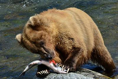 Photograph - Serving Up Salmon Grizzly Style by Patricia Twardzik