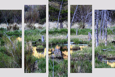 Photograph - Set 48 by Shane Bechler
