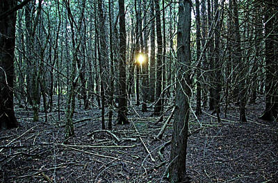 Photograph - Setting Sun In The Woods I by Debbie Oppermann