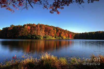 Photograph - Setting Sun Light On Trees In The Fall by Dan Friend