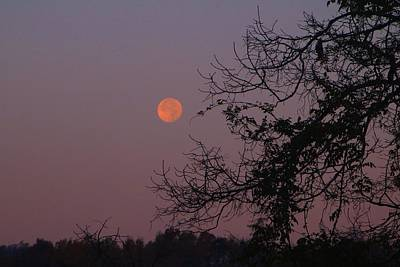 Photograph - Setting Supermoon by Kathryn Meyer