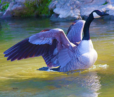 Goose Digital Art - Settling In by Betsy Knapp