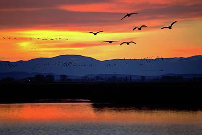 Photograph - Seven Am Flight by Mike Flynn