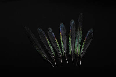 Photograph - Seven Black Feathers by Randi Grace Nilsberg
