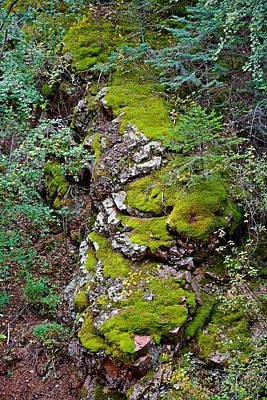 Photograph - Seven Falls Flora Study 10 by Robert Meyers-Lussier