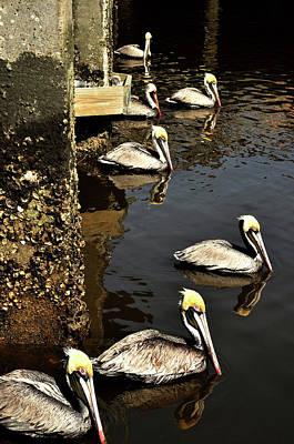 Seven Pelicans Art Print
