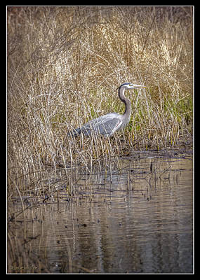 Photograph - Seven Ponds Nature Center Blue Heron by LeeAnn McLaneGoetz McLaneGoetzStudioLLCcom