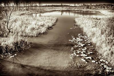Photograph - Seven Ponds Nature Center Tree Top Pond Bw by LeeAnn McLaneGoetz McLaneGoetzStudioLLCcom