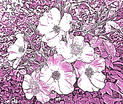 Seven Sisters Rose In Pen And Ink Art Print by Marian Bell
