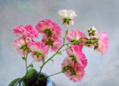 Photograph - Seven Sisters Roses by Louise Kumpf