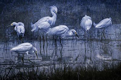 Photograph - Seven Snowy Egrets, Cyan by Belinda Greb